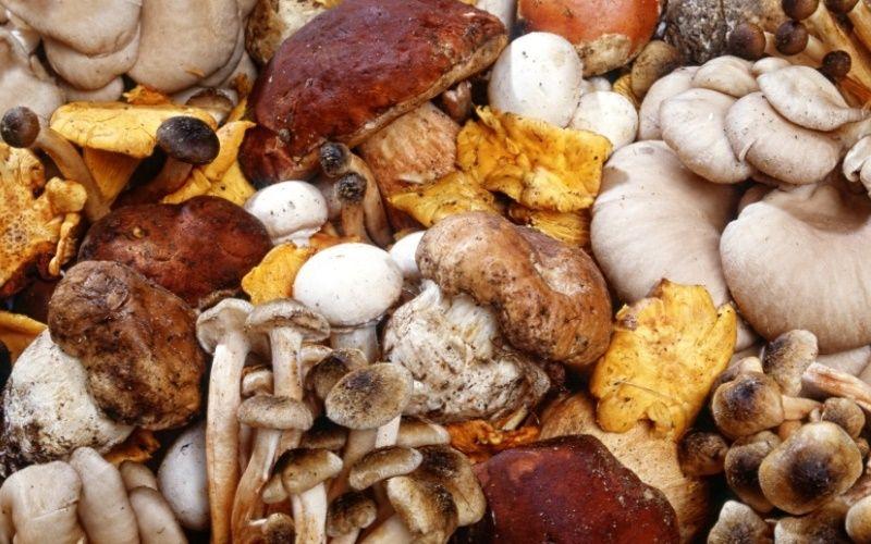 Грибы: состав, польза и употребление. Как хранить и готовить грибы