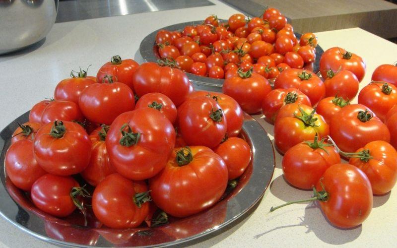 Подготовка помидоров: специи, травы, сорта
