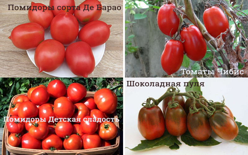 Сорта помидоров для консервации